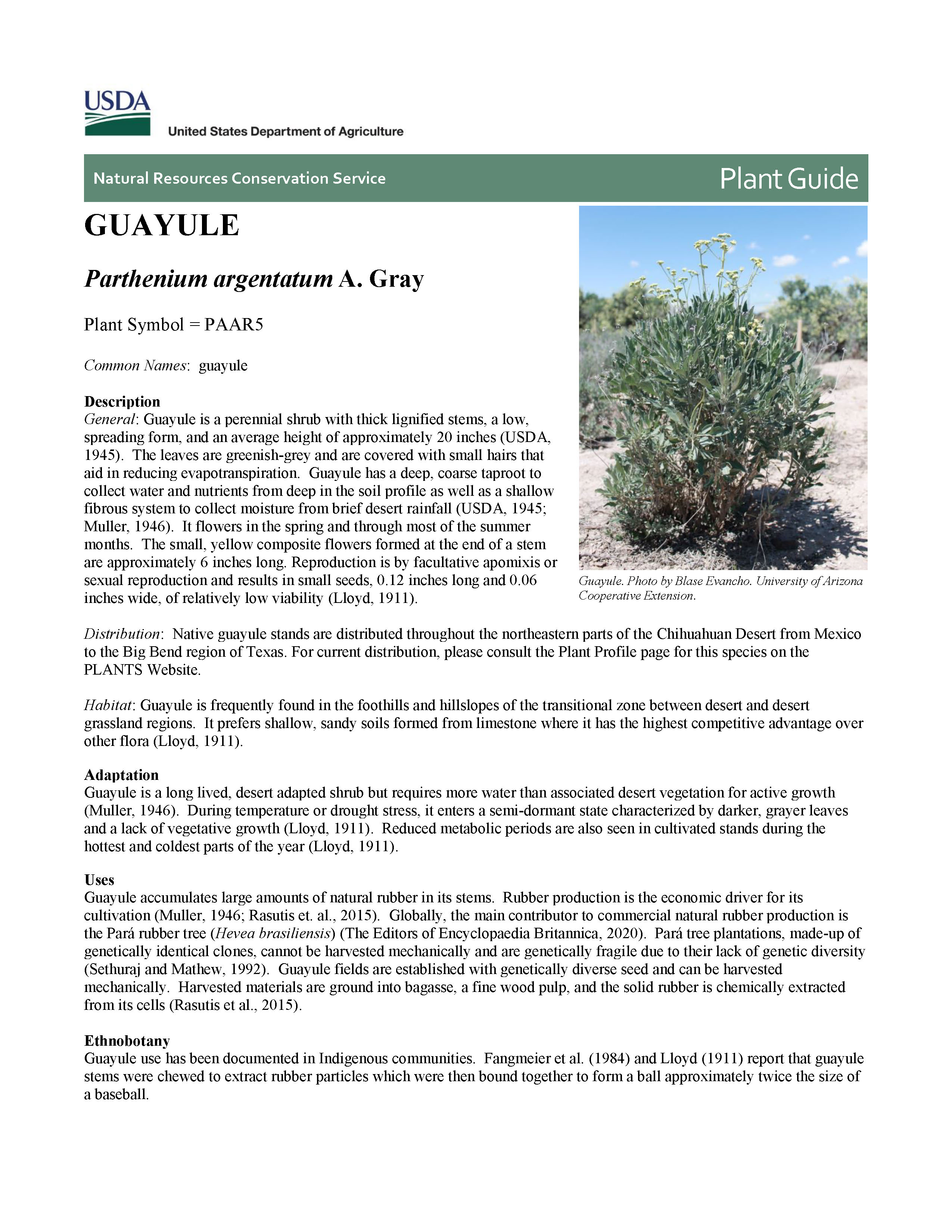 Guayule USDA Plant Guide cover page