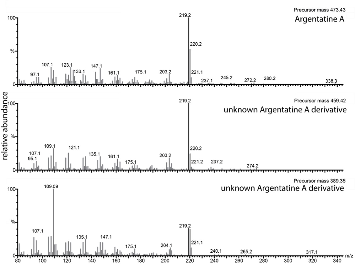 Mass Spectral Characterization for Argentatin A