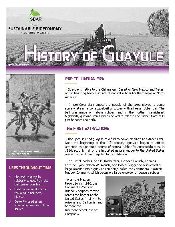 History of Guayule Fact Sheet
