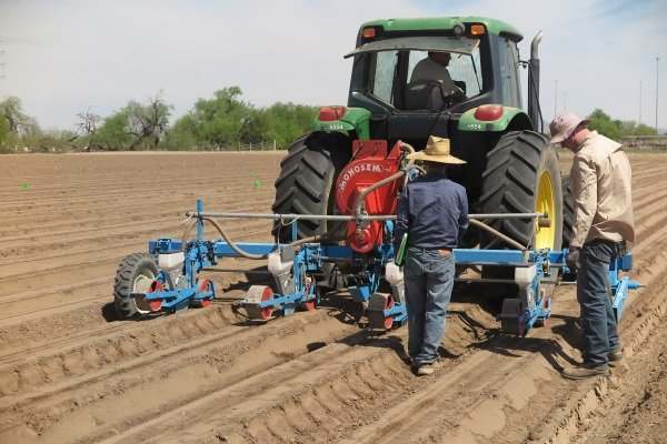 SBAR West 4.12.18 Guayule Planting