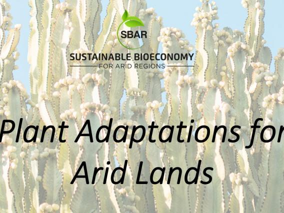 Plant Adaptations for Arid Lands
