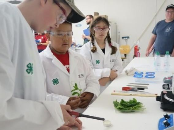 Youth participants exploring biofuel concepts through hands-on experimentation at a 4-H Youth Summer Camp