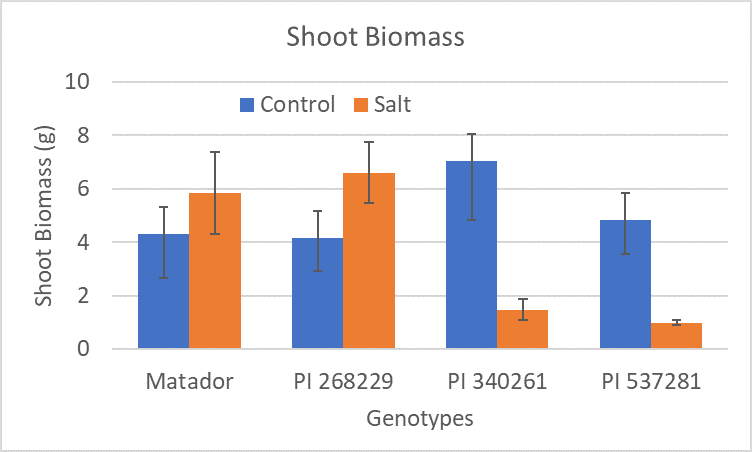 Comparison of shoot biomass of different guar genotypes under control and high salinity conditions