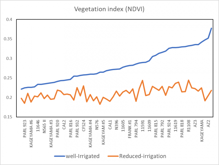 Normalized Difference Vegetation Index (NDVI) for guayule accessions under well-irrigated (blue line) and reduced irrigation (red line) at the Maricopa Agricultural Center, Arizona