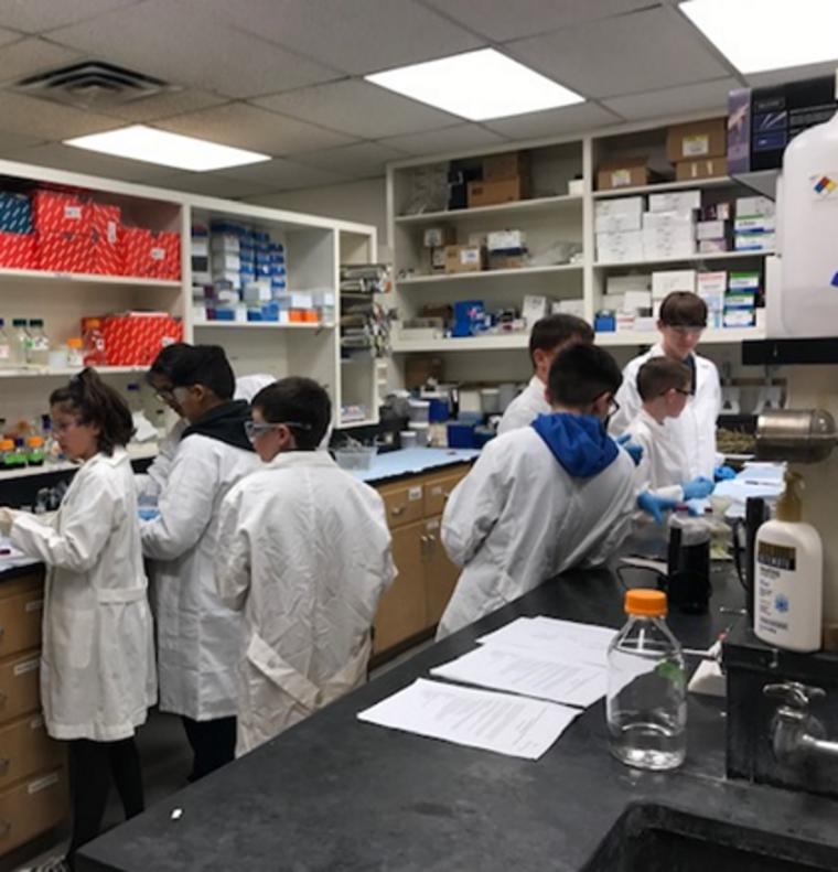 Students preparing extracts from guar seeds and guayule leaves
