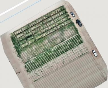 Aerial view (drone survey composite image) of guar research plots at Las Cruces, New Mexico