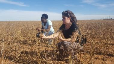 VeeAnder Mealing and Hailey Summers examining guar pods in the field to better understand harvesting and crop life cycle needs